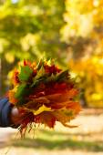 Bouquet of autumn leaves collected on a walk in the park — Stock Photo