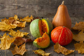 Three pumpkins of different colors and a piece of pumpkin on woo — Stock Photo