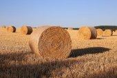 Drying straw — Stock Photo