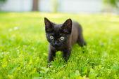 Cute black cat lying on green grass lawn, shallow depth of field — Stock Photo