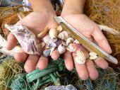 Handful of shells  in both hands — Stock Photo