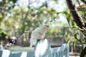Cockatoo bird playing with water — Stock Photo