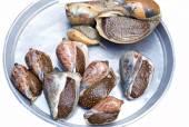 Fresh abalones snail close-up — Stock Photo