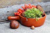 Boletes and moss in terracotta pan — Stock Photo