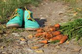 Carrots and shoes on the road full of leaves — Foto de Stock