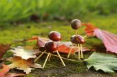 Chestnuts animals — Stock Photo
