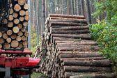 Timber Haulage — Stock Photo