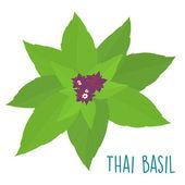 Vecteur de feuilles de basilic thaï frais ingrédient essentiel — Vecteur