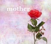 A Rose for Mother — Stock Photo