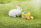 有趣的小小的兔和复活节蛋 — 图库照片