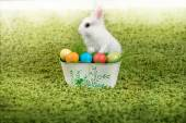 Funny little rabbit and Easter eggs — Stock Photo