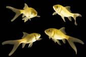Four carp — Stock Photo