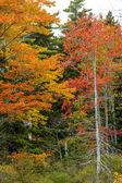 Litoral de Eagle Lake — Fotografia Stock