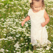 Little beautiful girl walks into a field of flowers in a white dress on a Sunny summer day — Stock Photo #52712897