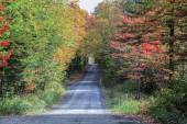 Sunny autumn day on a country road located in Quebec, Canada. — Stok fotoğraf