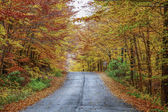 Rainy autumn afternoon on a country road located in Quebec, Canada. — Stok fotoğraf