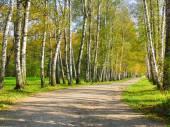 Осенний preshpect, Ясная Поляна, Тула, Россия — Стоковое фото