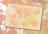 Stylized autumn background with frame for text — Foto de Stock