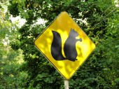 Yellow sign showing habitats of squirrels — Stock Photo