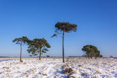 New Forest Trees in Snow — Stock Photo