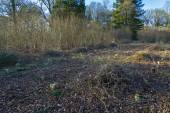 Coppicing in Oxfordshire Woodland during spring time — Stock Photo