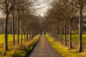 Avenue of young trees line a lane — Stock Photo