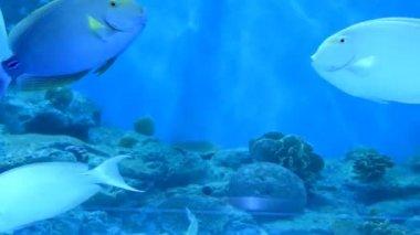 在水族馆的鱼 — 图库视频影像
