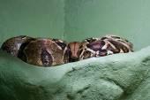 Dangerous huge snake — Stock Photo