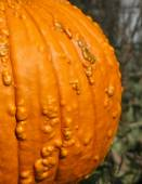 Orange pumpkin wallpaper closeup — Stockfoto