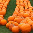 Heap of farm pumpkins on ground — Stok fotoğraf #55935043