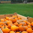 Heap of farm pumpkins — Stock fotografie #55937189