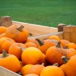 Heap of farm pumpkins — Stockfoto #55937199