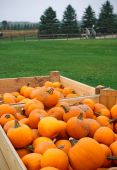 Heap of farm pumpkins — Stockfoto