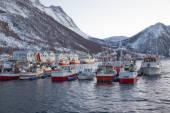 Norvegia in inverno - viaggio a senja — Foto Stock
