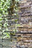 Dave plant on rock waterfall — Zdjęcie stockowe