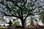 Big tree in Buddhist ancient temple — Stock Photo