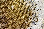 Favo de mel — Fotografia Stock