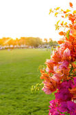 Bougainvillea in sunset — Stock Photo
