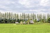 Farmer house — Stock Photo