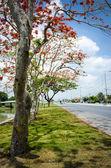 Beautiful tree beside a road — Stock Photo