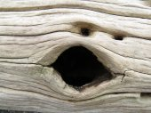 Face on the log — Foto Stock
