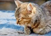 Dozing cat — Stock Photo