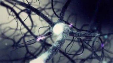 Véritable neurone synapse réseau animation 3d. Boucle infinie dans le cerveau humain en Full Hd — Vidéo