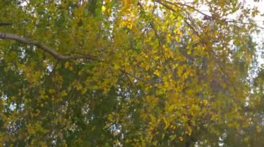 Sunny fall leaves in the forest — Stockvideo