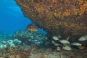 Tropical Reef Underwater — Foto Stock