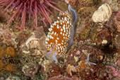 Pacific Ocean Underwater Sea Life — Stockfoto
