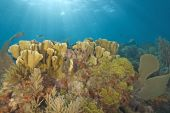 Coral Reef Underwater Scuba Diving — Stock Photo