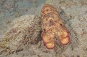 Hawaii Underwater Coral reef — Stok fotoğraf