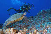 Scuba diver and Sea Turtle swimming at Hawaii Coral reef — Stockfoto