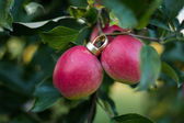 Rings on red apple — Photo